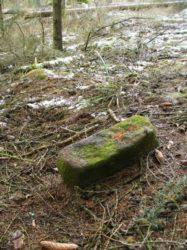 Vytyčení lesních pozemků