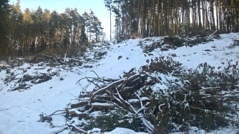 vytyčení lesního pozemku